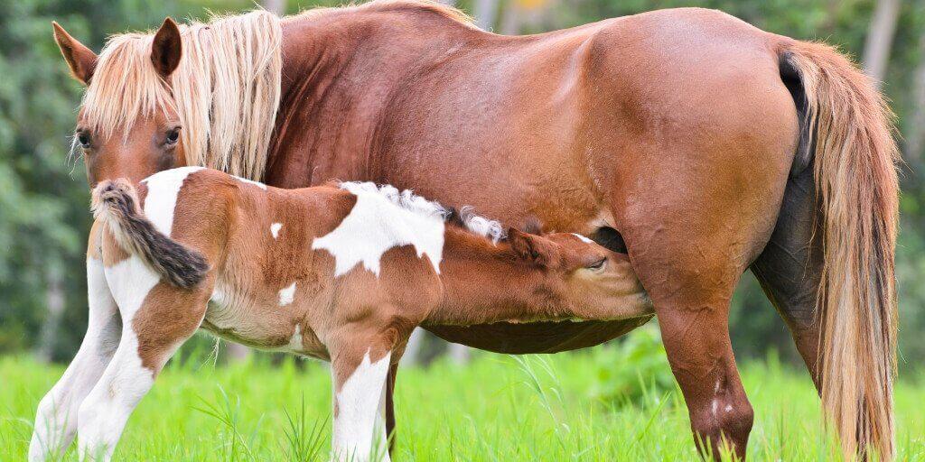 Обычный герой: лошади идут на мясо, а государство требует еще больше денег - новости - 66.ru