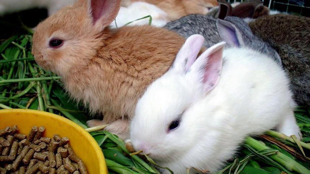 Кормление кроликов в домашних условиях: что должно входить в рацион питания и чем нельзя кормить кроликов