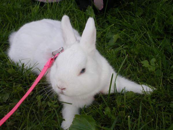 Декоративные кролики: продолжительность жизни