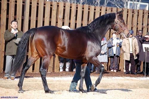 Сколько стоит самая дорогая лошадь в мире: полцарства за коня