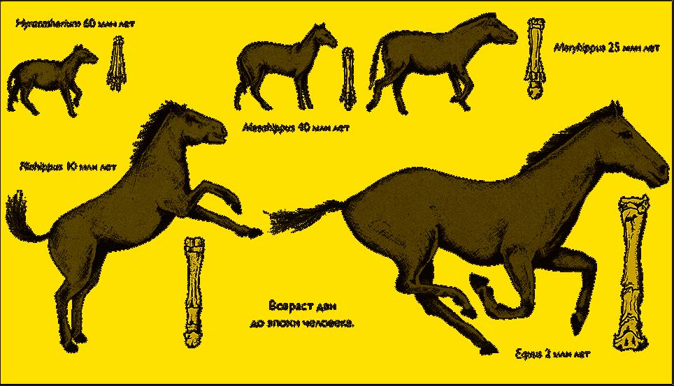 Все о науке о лошадях: изучение истории эволюции лошадей, откуда они появились  