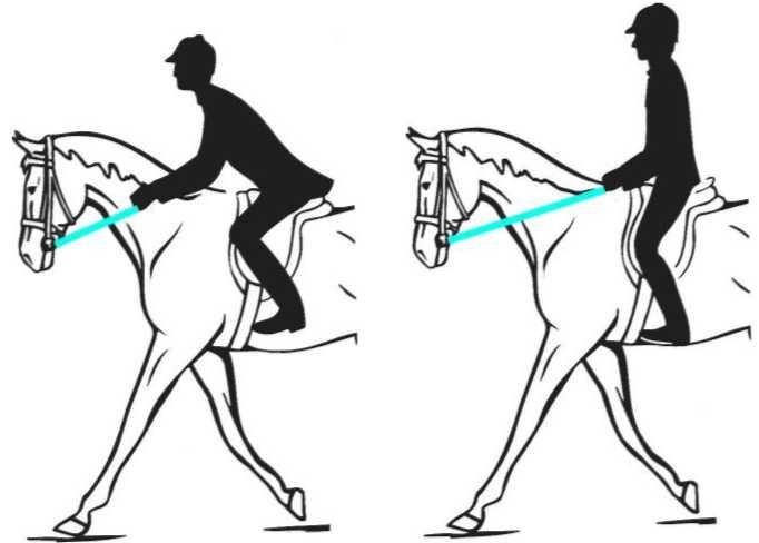 Сесть на коня: что нужно знать о верховой езде новичку