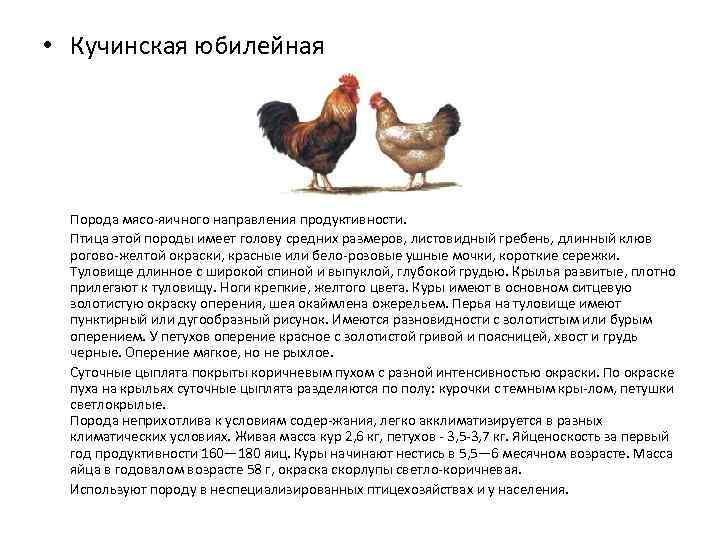 Яйценоские породы кур и самые лучшие несушки фото