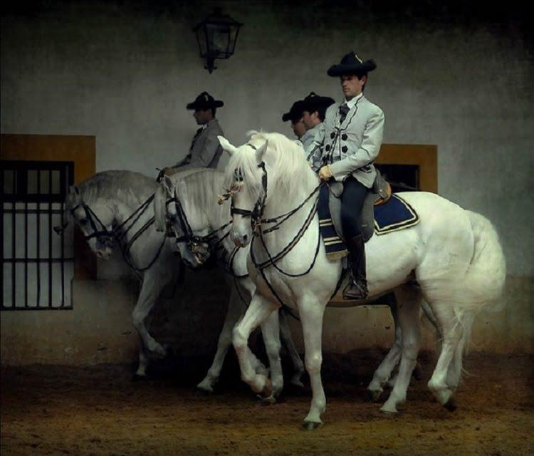 Андалузская лошадь: фото, характеристика породы, внешнее строение, на каком полуострове выведена