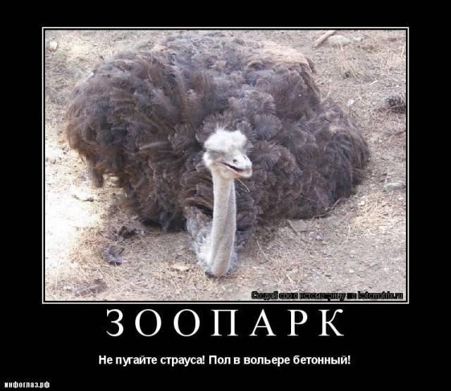 Почему страусы прячут голову в песок? | вечные вопросы | вопрос-ответ