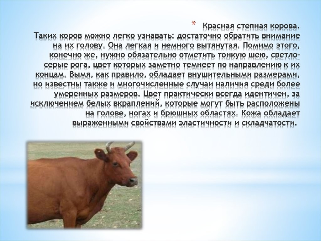 Красная степная порода коров: появление вида, внешние характеристики, описание, фоток