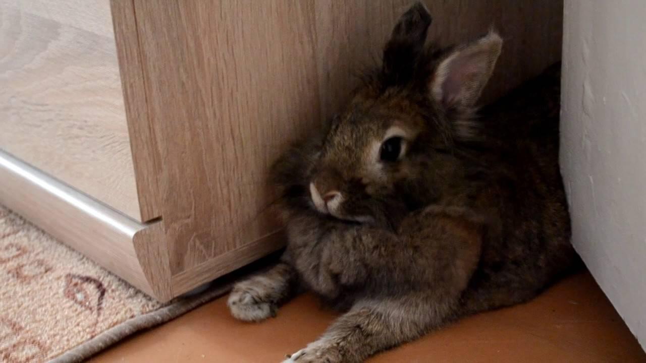 Кастрация кроликов, стерилизация декоративного кролика