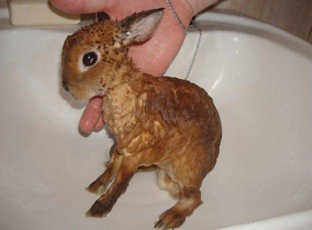 Как купать декоративного кролика: советы и видео
