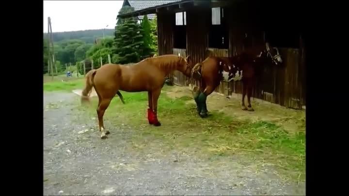 Случка и спаривание лошадей в табуне, как размножаются дикие жеребцы и кобылы: описание и видео