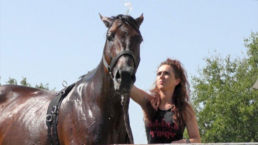 Кабардинская порода лошадей (28 фото): характеристика породы и история ее происхождения. особенности разведения и содержания