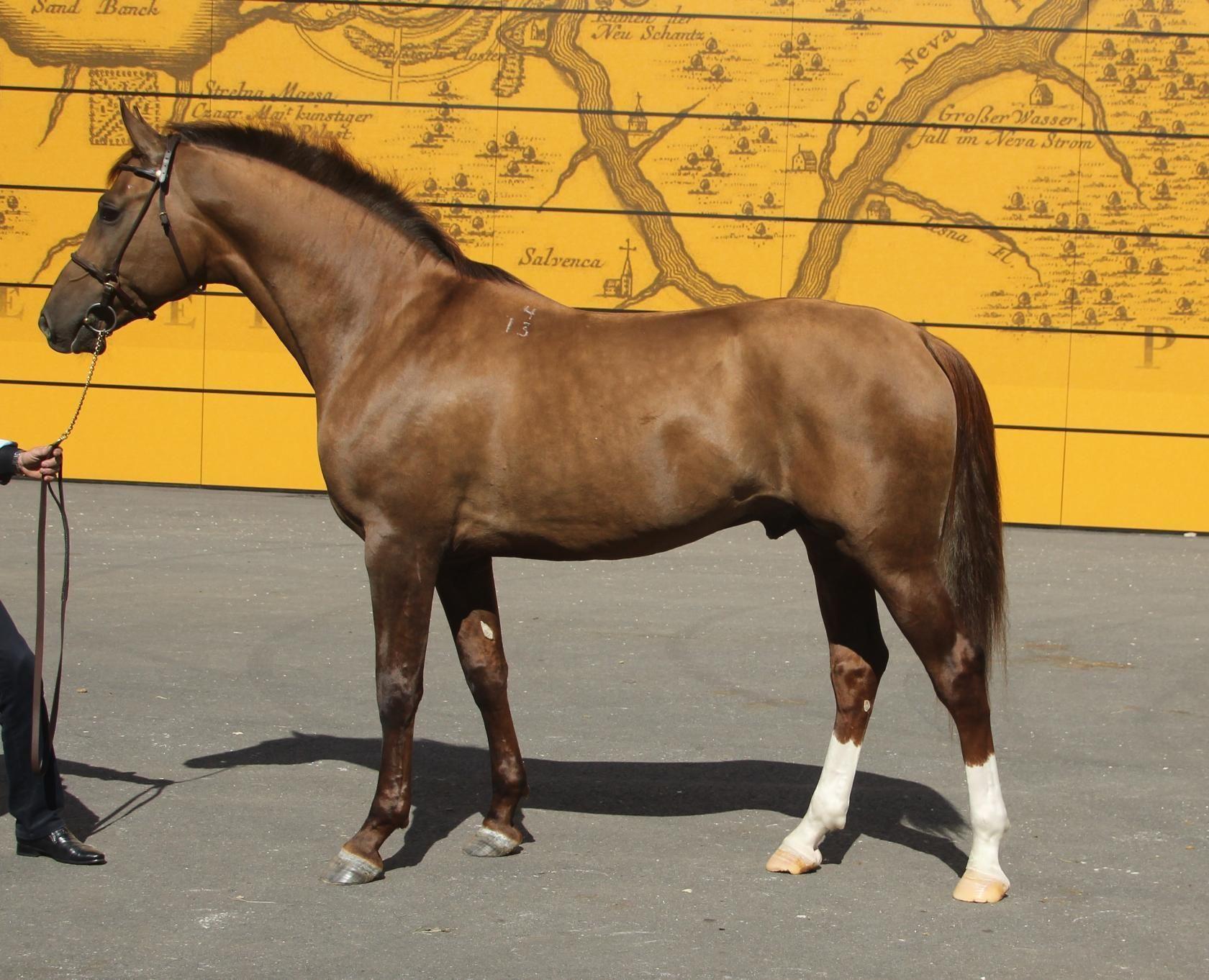 «золото степей» - в россии стартовал проект возрождения донской породы лошадей