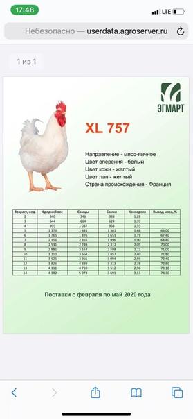 ✅ росс-308: характеристика бройлера, описание породы и фото, особенности выращивания, кормления и ухода - tehnoyug.com