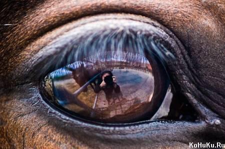 Глаза лошадей