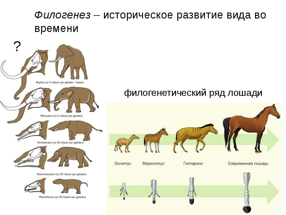 Лошади в древности