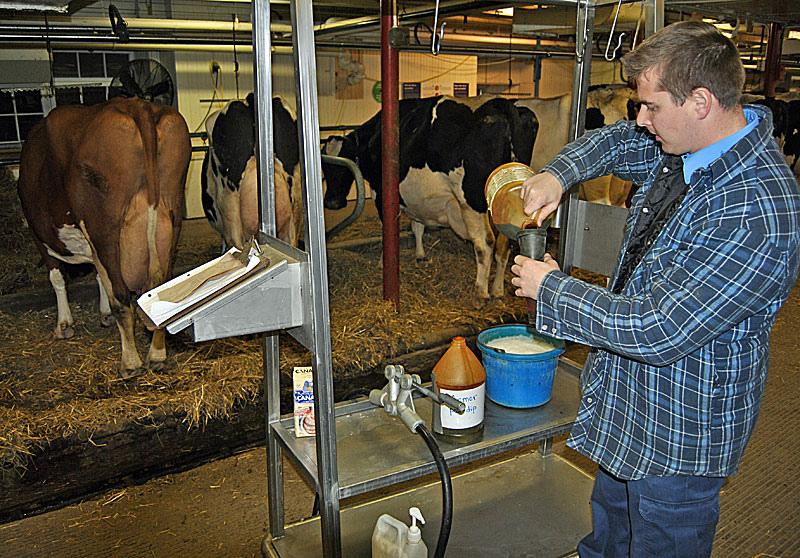 Мастит у коровы — чем лечить этот недуг?