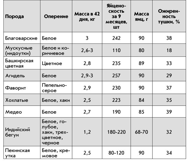 Благоварская утка: фото, описание, характеристика