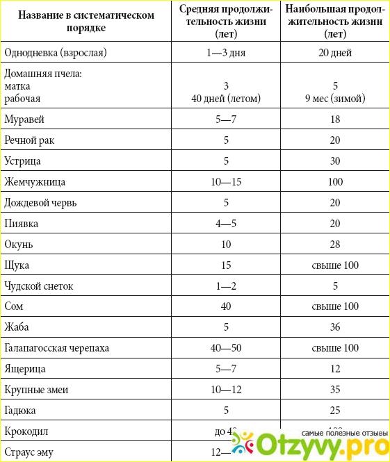 Утки темп: описание породы, отзывы, содержание и уход