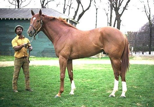 Топ знаменитих коней світу: анілін, абсент, болд рулер, болівар, зеньятта, сухар
