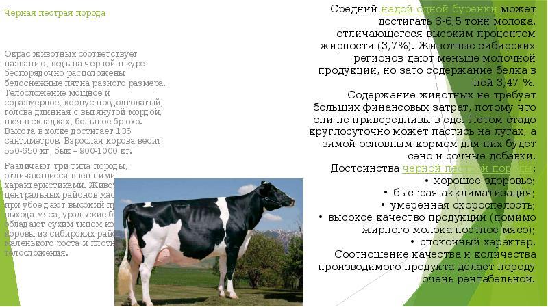 Описание породы коров молочного, мясного, мясо-молочного направления