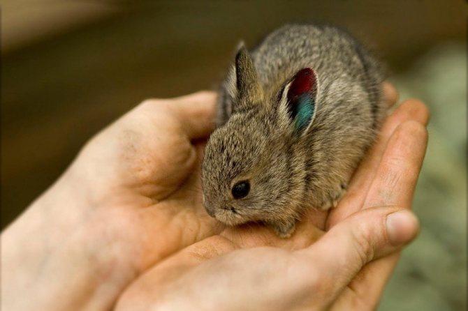 На сколько опасно и полезно – ли давать кроликам морковку