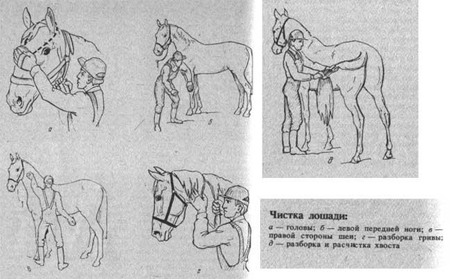 Разведение и размножение лошадей в домашних условиях