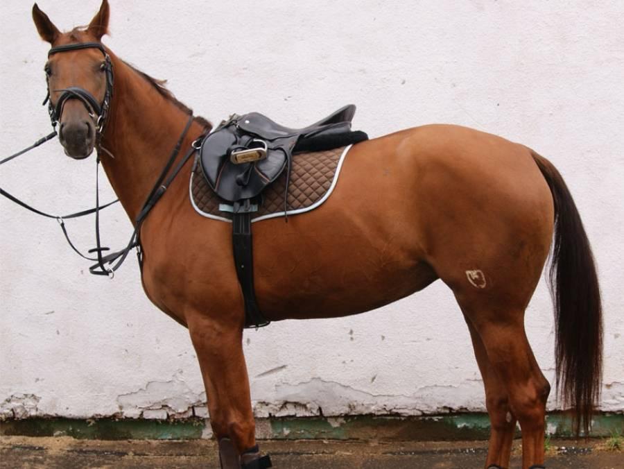 Амуниция для лошади