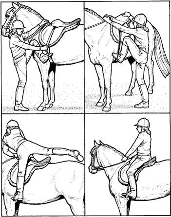 Как нужно ездить на лошади?