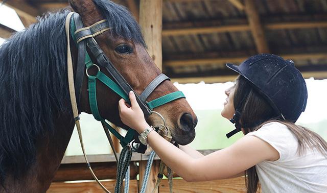 Содержание и уход за лошадьми в домашних условиях
