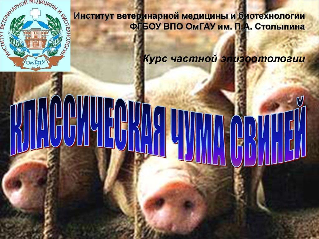 Инструкция по применению вакцины от чумы свиней и противопоказания