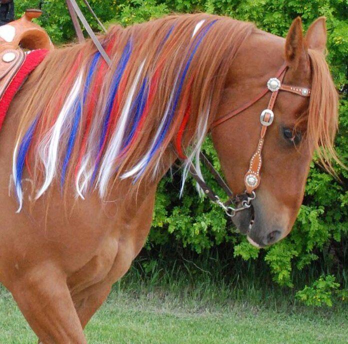 ✅ о хвосте и гриве лошади: особенности ухода за конским хвостом и гривой - tehnomir32.ru