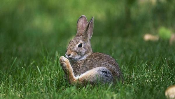 Кролики стучат задними лапами