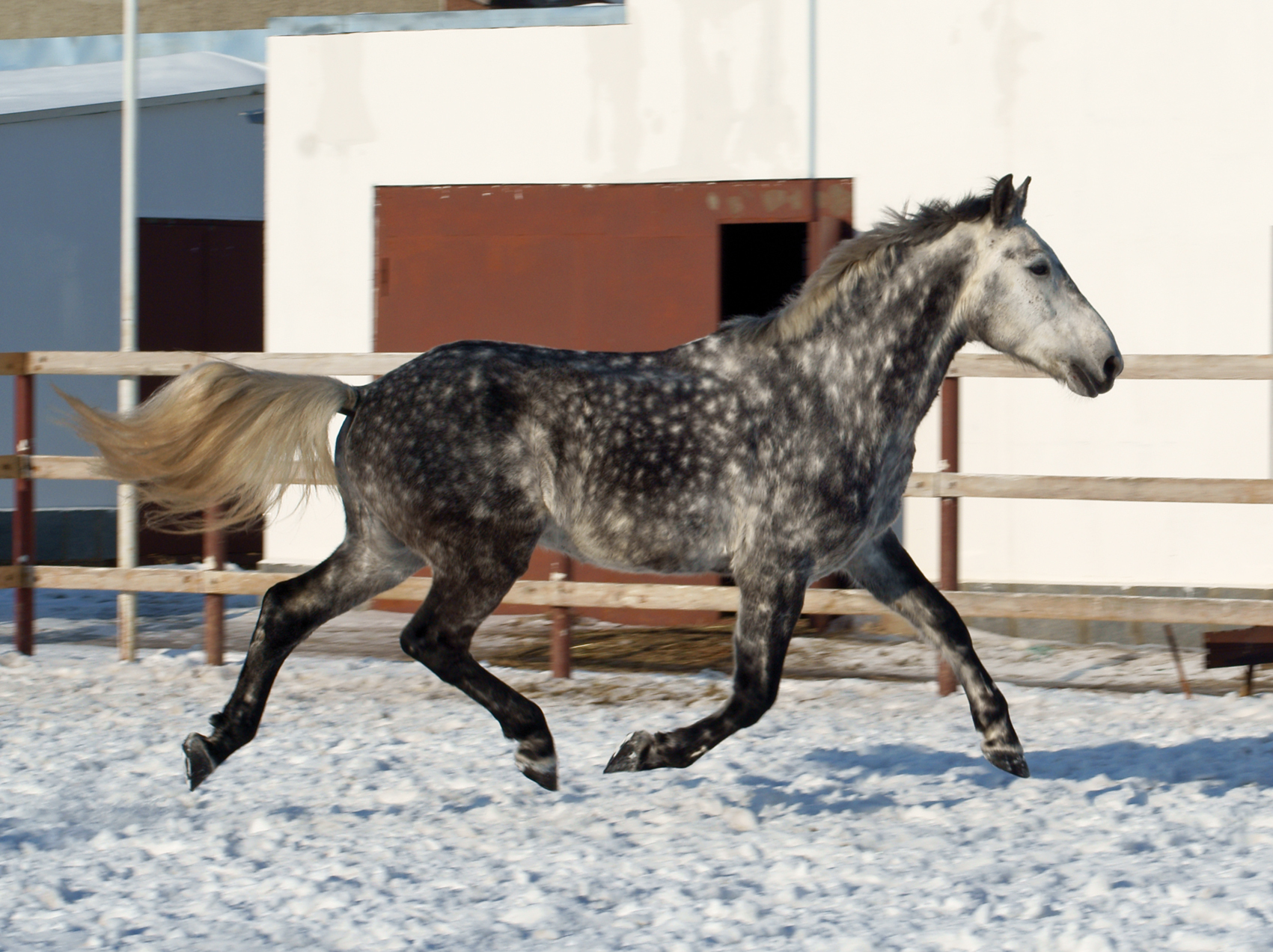 Знаменитая орловская порода лошадей: характеристика и условия содержания
