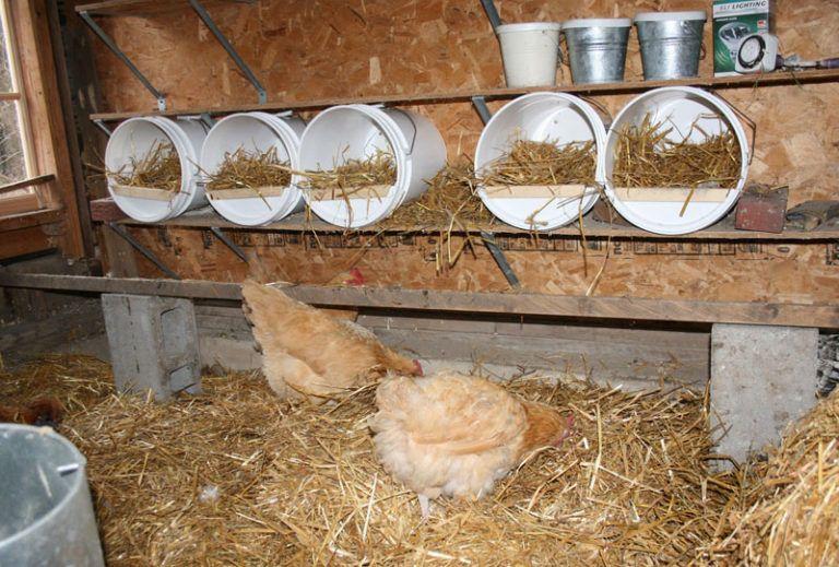 Гнездо для кур несушек: как сделать правильно своими руками, размер и другие правила строительства
