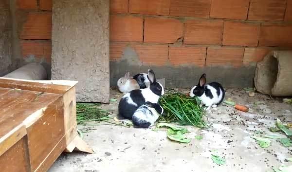 Язык кроликов - звуки, топот, развлечения и общение