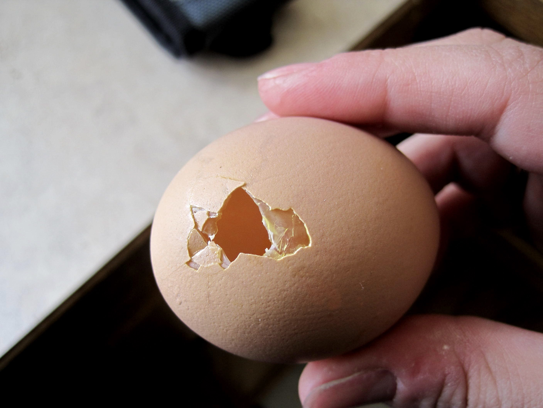 Что делать, если куры клюют свои яйца