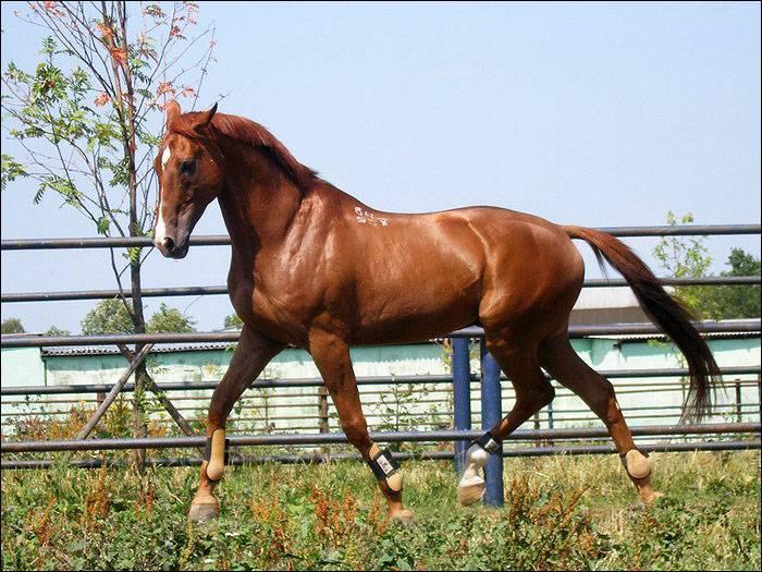 Донская и буденновская порода лошадей в спорте: исследование за 2019 год