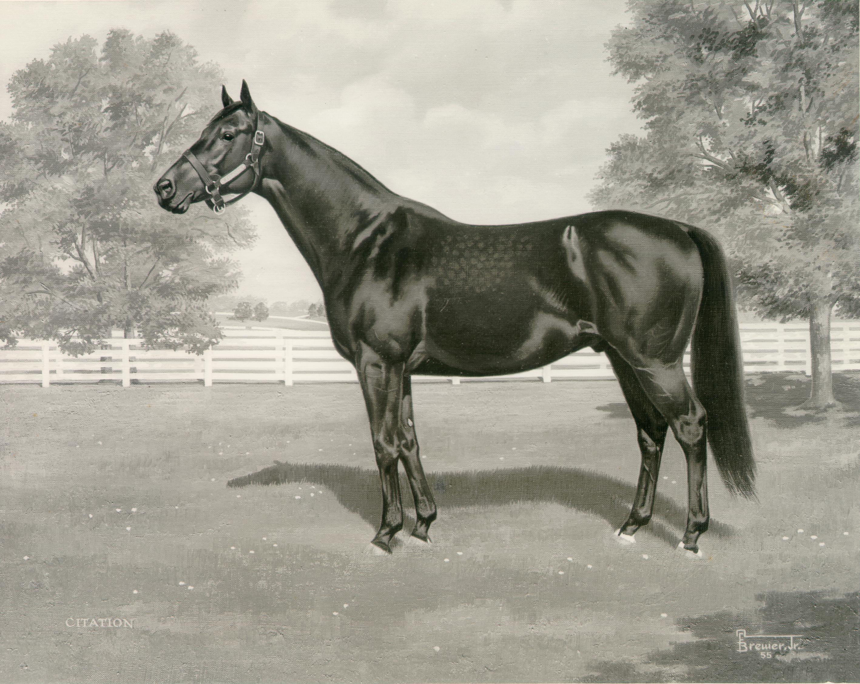 Лошадь по кличке сухарь - дачный мир | все о о даче