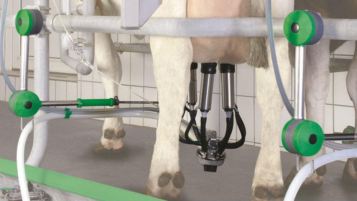 Технология доения коров agrovoz.su