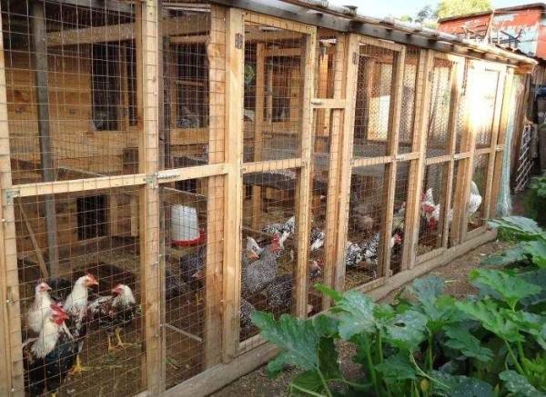 Мастер-класс по изготовлению загона для цыплят своими руками с его фото