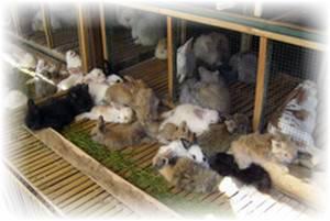 Чем обработать клетки кроликов после болезни. методы дезинфекции клеток для кроликов