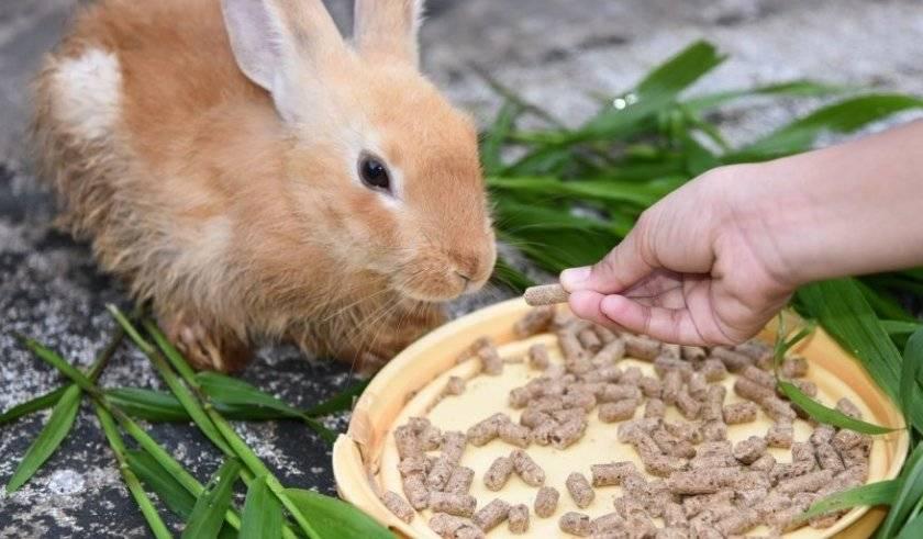 Как, когда и чем кормить кроликов?