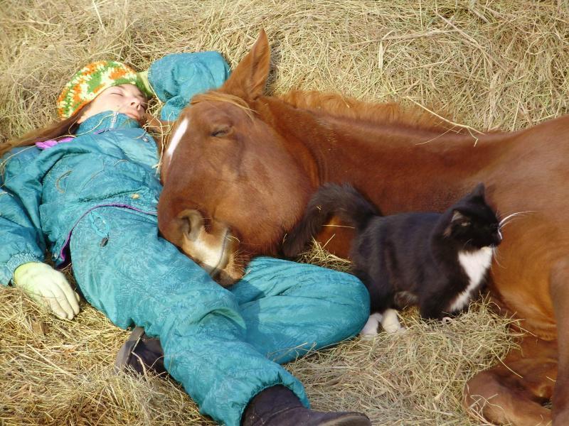 Как спят лошади? правда ли что кони спят стоя?