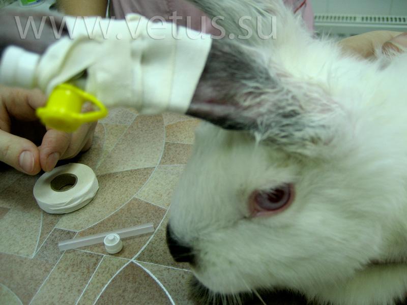 У кролика понос, что делать - практические рекомендации по уходу