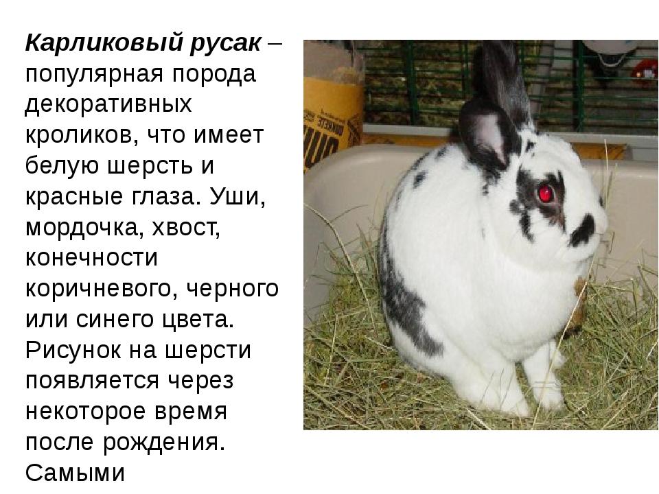 Кролик бабочка: описание породы, разведение и уход