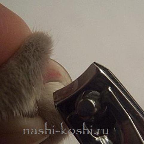 Как правильно подстричь когти кошке в домашних условиях, если она не даётся: можно ли стричь вообще?