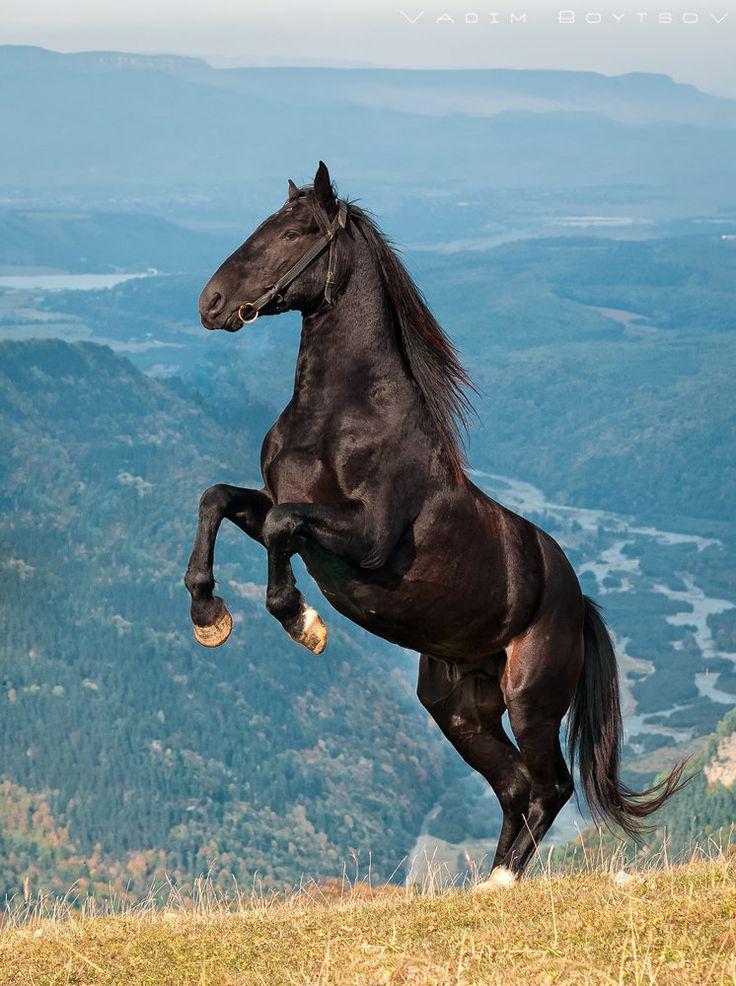 Кавказские жемчужины – описание лошадей карачаевской породы |
