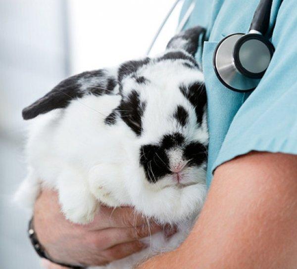 Чем лечить мокрую мордочку у кролей