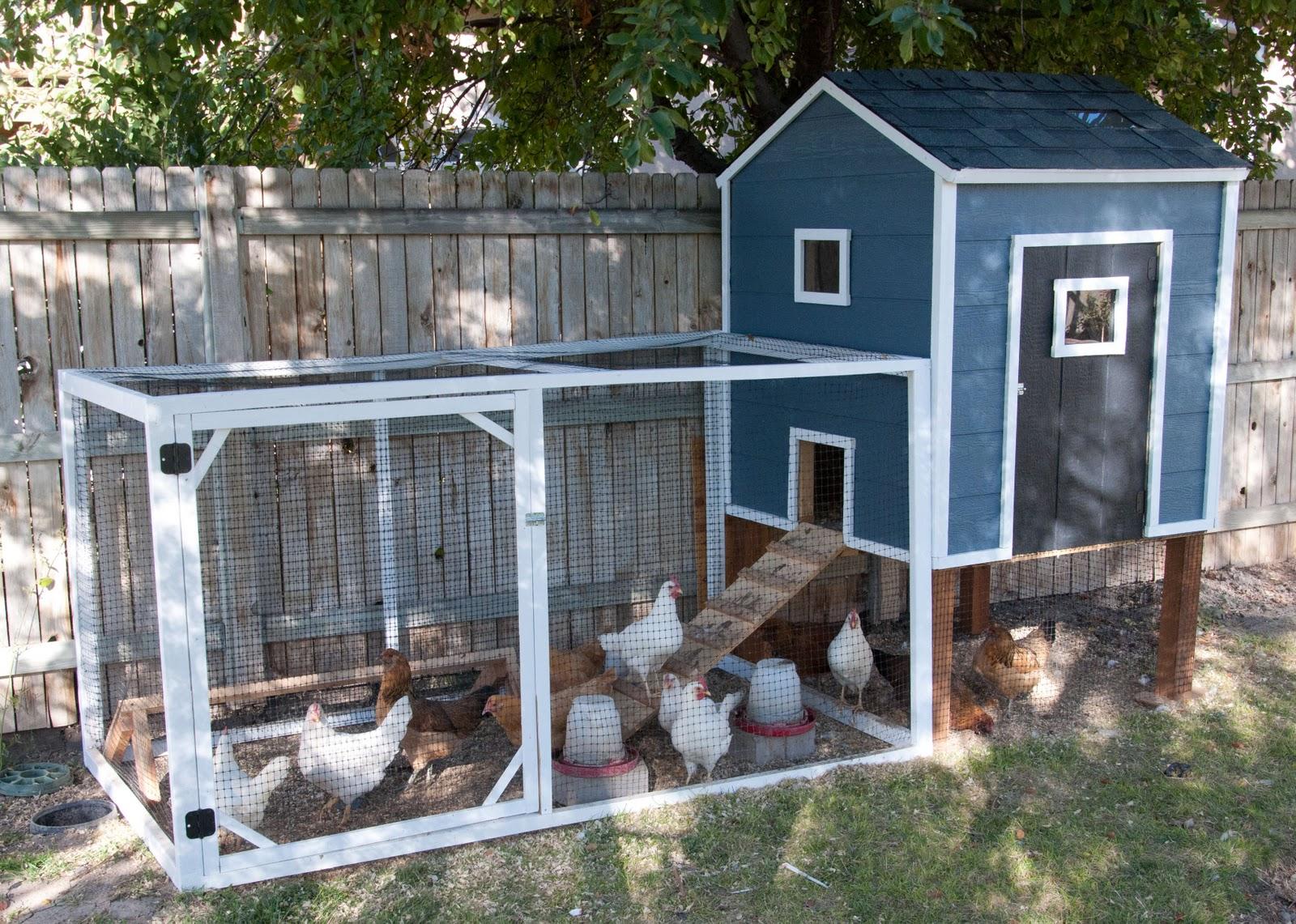 Курятники для кур-несушек своими руками (28 фото): как обустроить сарай внутри, устройство и чертежи, как правильно построить птичник