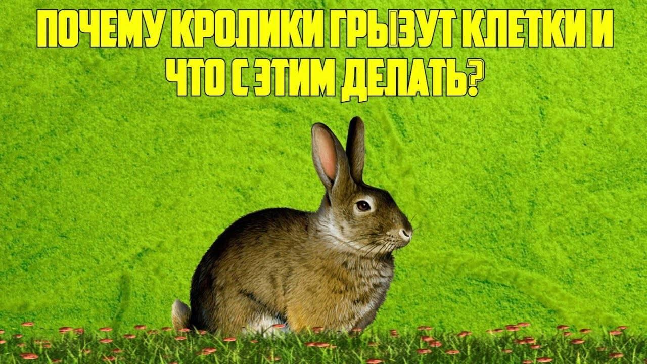 Почему кролики грызут клетки и что делать - ogorodguru