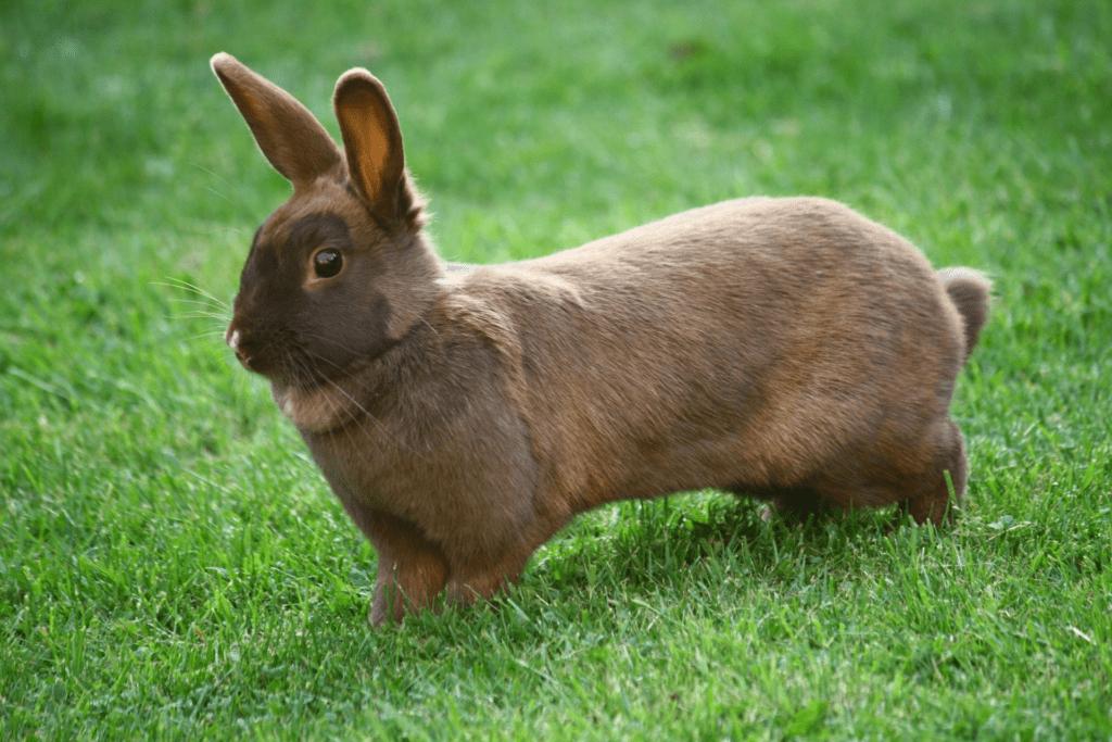 Почему кролик бьет задними лапами
